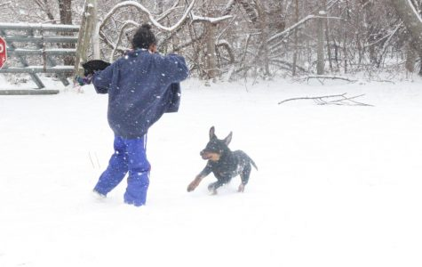 Puppy's First Snow ( Photos by-JaSyra Kennedy)