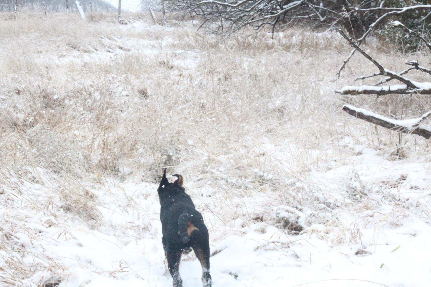Puppy%27s+First+Snow+%28+Photos+by-JaSyra+Kennedy%29