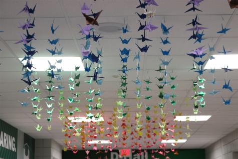 Rainbow Cranes in D-Hall (Photos by Zara Thomas)