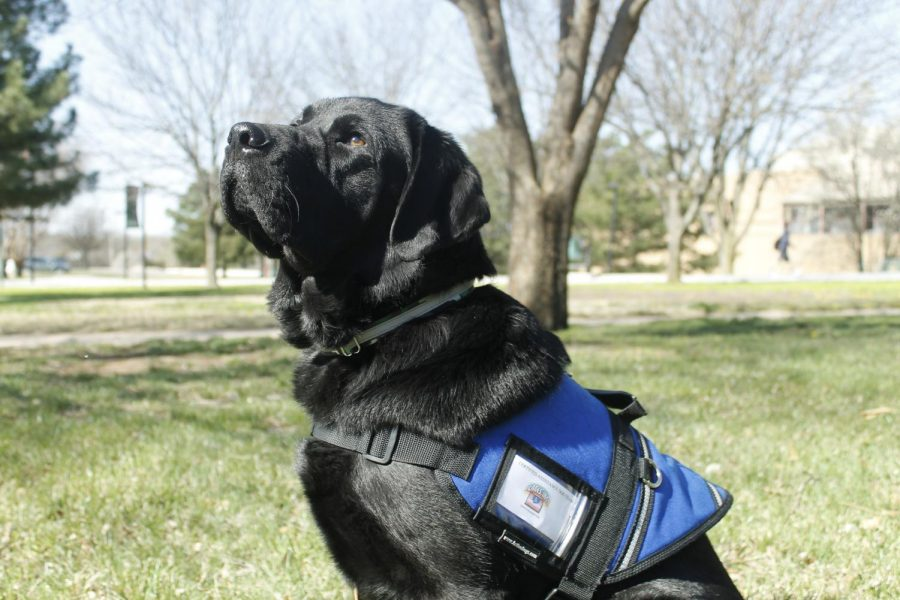 Argo the Therapy dog (Photos by Josie Nussbaum)